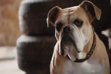 Happy Dog-Werbung