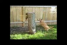 Hund und Eichhörnchen