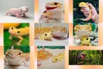 Immer-lachender-Gecko.pps auf www.funpot.net