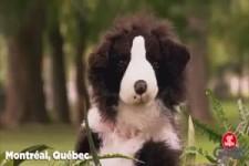 Versteckte Kamera - falscher Hund