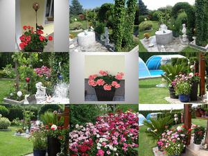 Liebe Gruesse aus meinem Garten