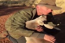 Knuddeliges Känguruh