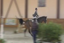 Pferd macht alleine weiter