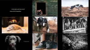 Hund Fotograf des Jahres 2017 Gewinner & Finalisten