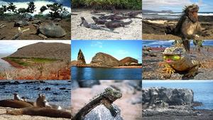 Galapagos sehenswert.Erika