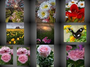 Beautyful Blumen 6