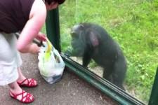 Affe weiß genau was er will
