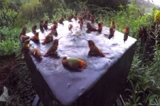 Vogelbad