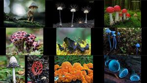 Die schönsten Pilze