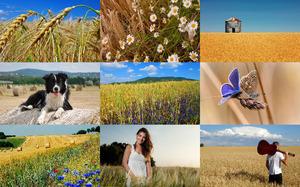Wheat Fields 2 - Weizenfelder 2