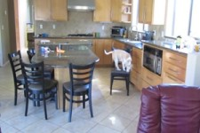 Die Küche inspizieren