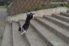 Wie Hunde Treppen bewältigen