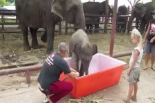 Baby Elephant Bathing Double trouble 1