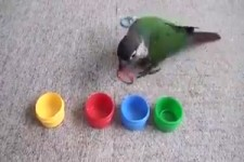 Intelligenter Vogel