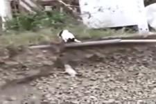 Katze rettet Welpen