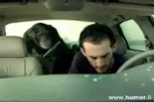 Affengeil