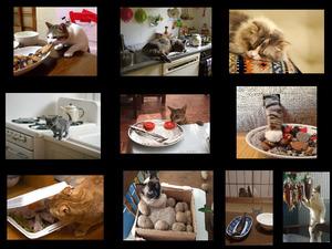 Cats - Chats - Katzen