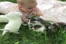 süße Babys