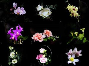 The full flower - Die volle blume