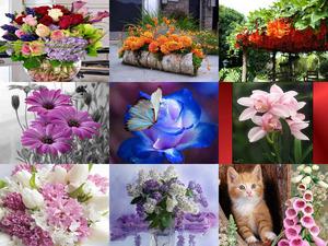 Super Blumen
