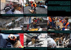 Rescue Dogs in Mexico - Rettungshunde in Mexiko