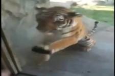Tiger reizen