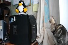 Die Katze und das CD-Fach