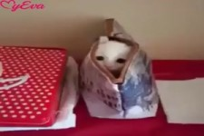 Lustige Aufnahmen von Katzen und Hunden