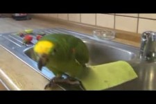 Papagei Morgenlaune