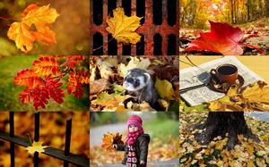 Autumn Leaves - Herbstblätter