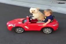 Babys und Hunde
