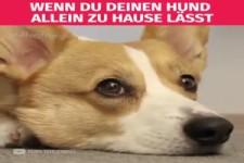 wenn du deinen Hund allein zu Hause lässt