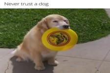 Glaube nie einem Hund