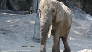 The oldest zoo in the world Vienna - ältester Zoo der Welt