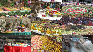 Affen Festival Thailand