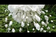 Toilet Paper Flowers