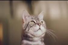 Katzen sind fies