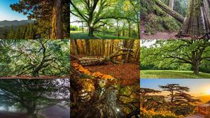 Bäume 11