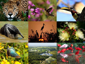 Brasilien-Pantanal