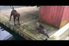 Dieser Otter wollte nur spielen