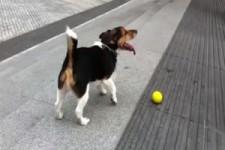 Cleverer Hund - spielt mich sich alleine