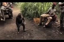 Was für ein Affe