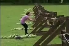 Melonenschleudern geht schief