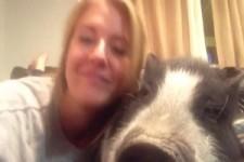 Lustiges Hausschweinchen