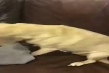 Spezial Hund