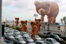 Die Bären-Invasion