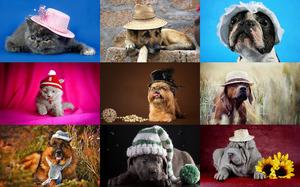 Pets in Hats - Haustiere mit Hüten