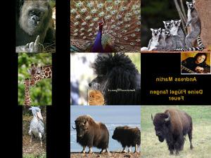 Bilder-Galerie vom 30102017 1 Tiere