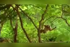 Freche Affen