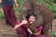 Baby-Elefant will kuscheln